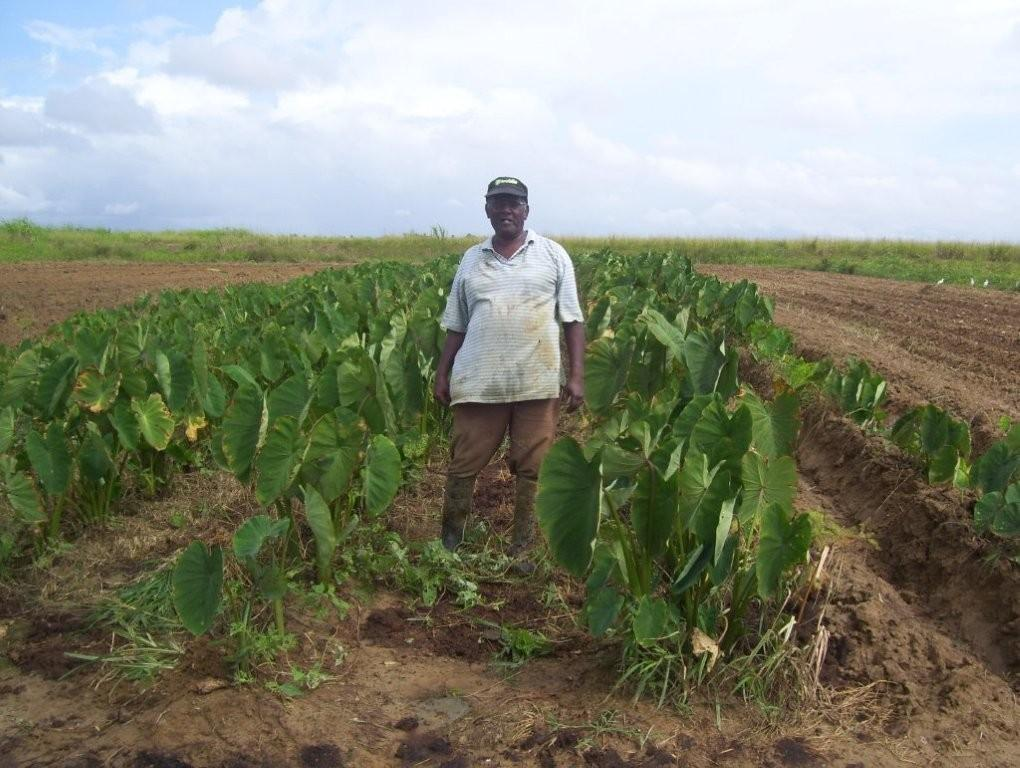 Local Farmer Ramdeo Boondoo